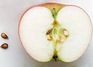 Картинки по запросу семечки яблок